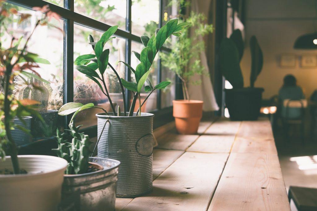 plants near a window