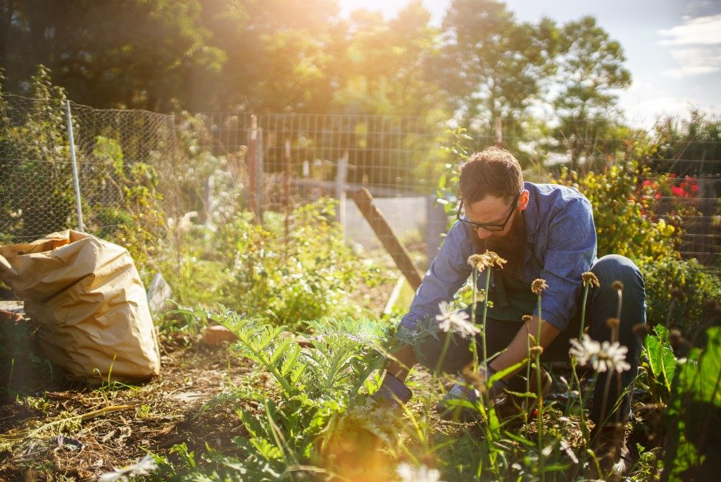 Man planting in his backyard garden