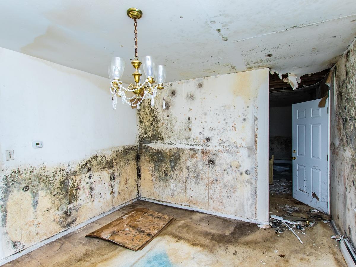 moldy house