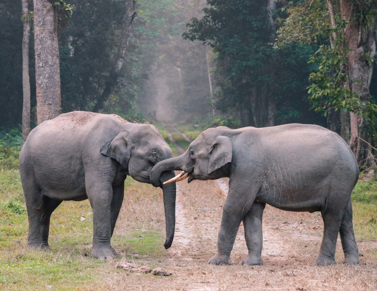two elephants playing with each other