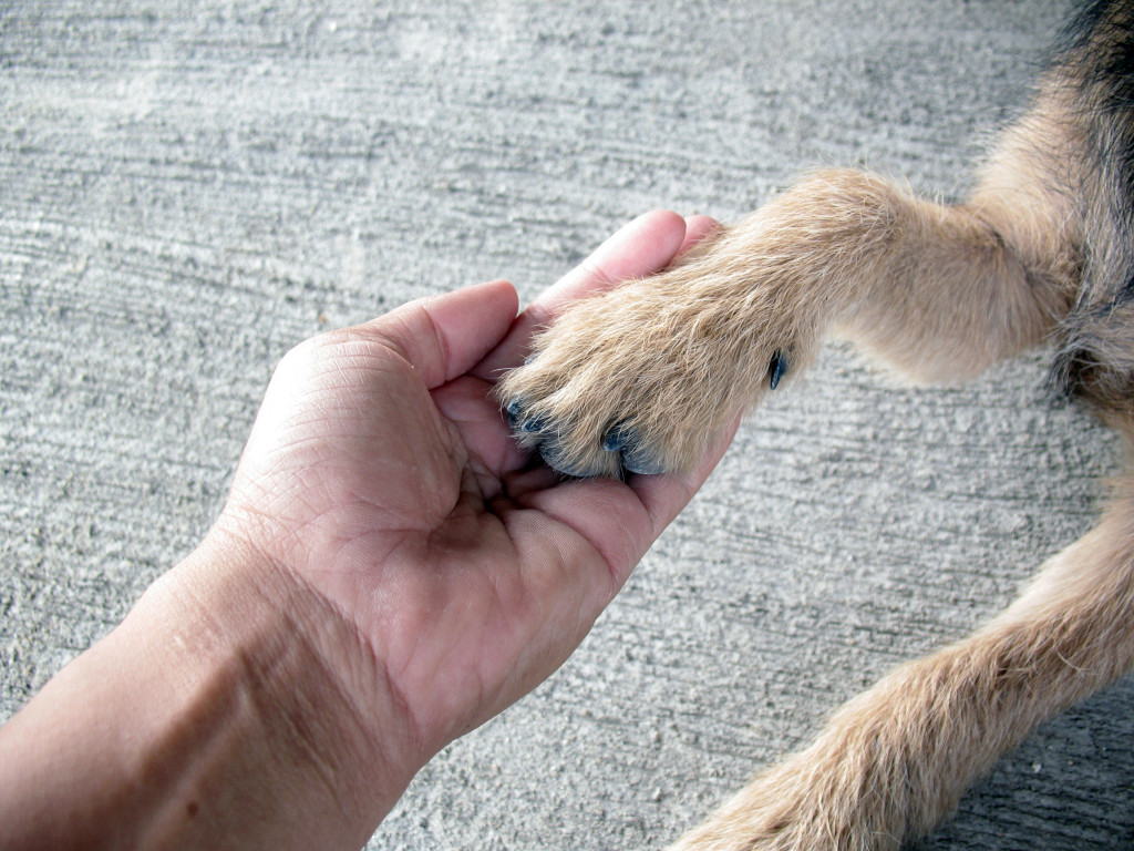 A man holding his pet's hand